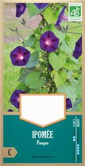 Semi di ipomea purpurea bio