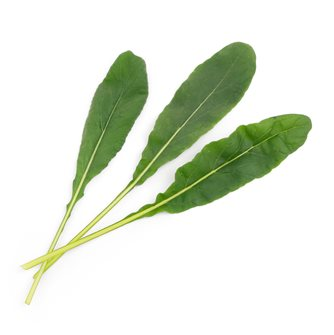 Mibuna ricarica Lingot per orto Véritable